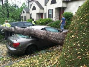 fallen-trees